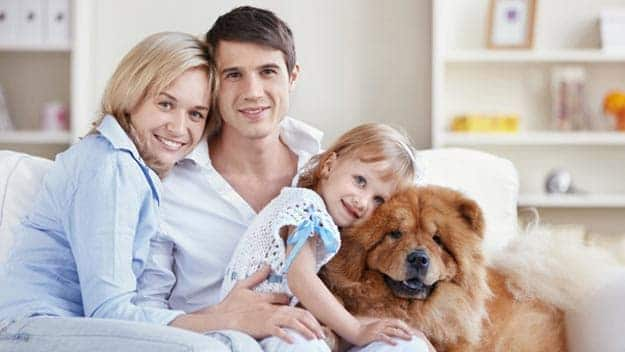 Wills & Trusts dog-young-family Direct Wills Swadlincote